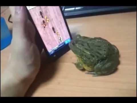 Žaba igra igru na mobilnom telefonu